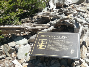 Storytelling and Prometheus in Great Basin National Park