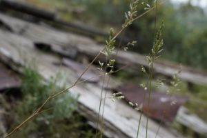 Grass over old wood